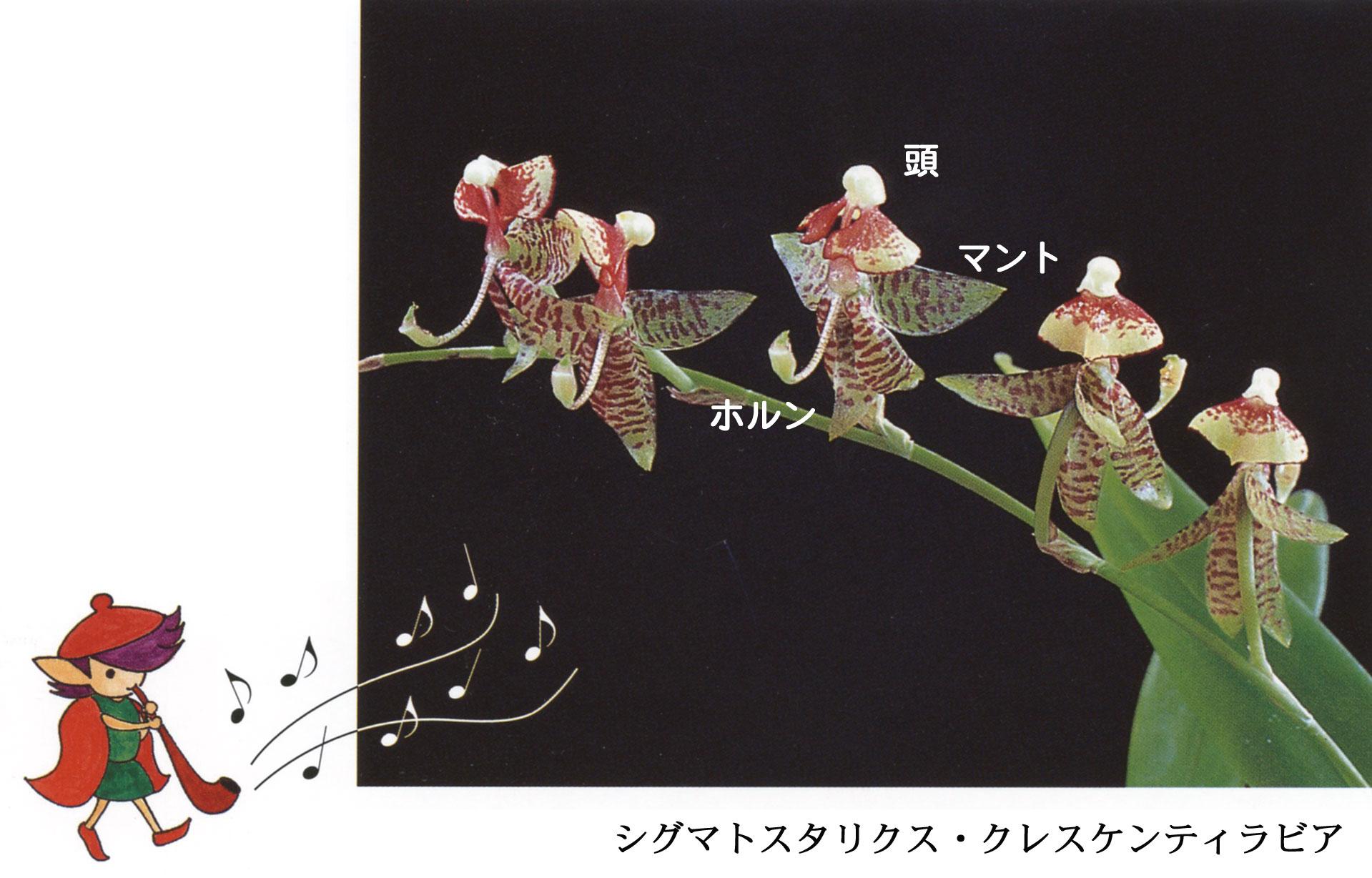 クレスと花の写真罫なしweb.jpg